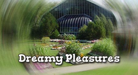 Dreamy Pleasures